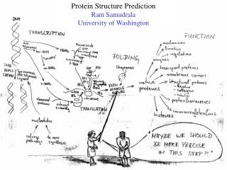 Protein Structure Prediction Ram Samudrala University of Washington