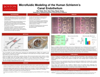 Microfluidic Modeling of the Human Schlemm's Canal Endothelium