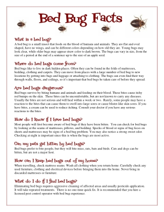 Bed Bug Facts Bed Bug Facts