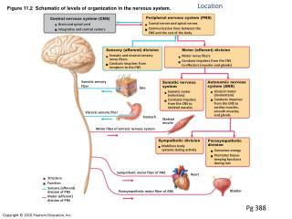Figure 11.2 Schematic of levels of association in the sensory system.