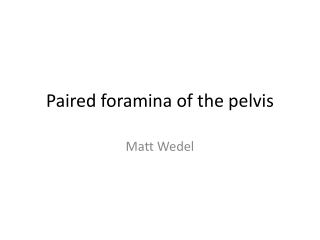 Paired foramina of the pelvis