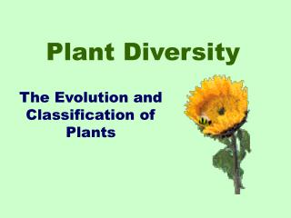 Plant Differing qualities