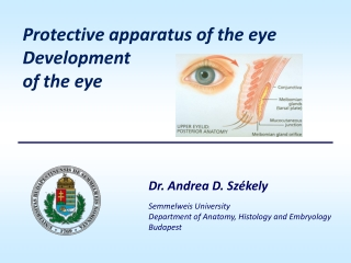 Protective apparatus of the eye