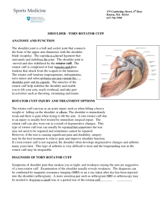 SHOULDER - TORN ROTATOR CUFF ANATOMY AND FUNCTION