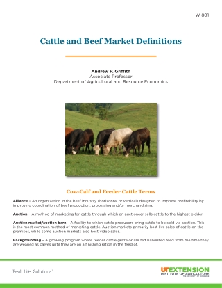 Cattle and Beef Market Definitions