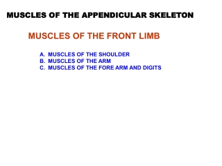 MUSCLES OF THE FRONT LIMB