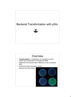 Bacterial Transformation with pGlo Overview