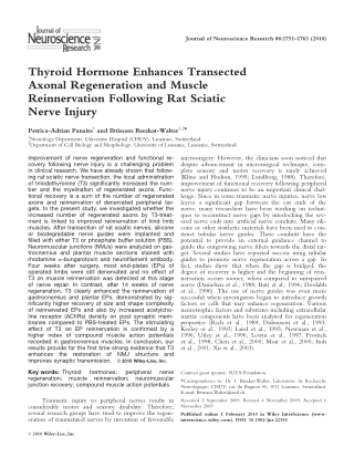 Thyroid Hormone Enhances Transected Axonal Regeneration and Muscle Reinnervation Following Rat Sciatic Nerve Injury