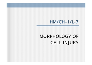 HM/CH-1/L-7 MORPHOLOGY OF CELL INJURY