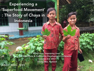 Experiencing a 'Superfood Movement' : The Story of Chaya in Indonesia