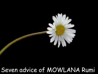 Seven guidance of MOWLANA Rumi