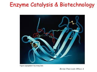 Enzyme Catalysis & Biotechnology Enzyme Catalysis & Biotechnology