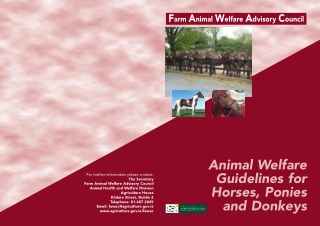 Animal Welfare Guidelines for Horses, Ponies and Donkeys