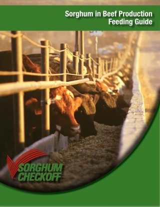 Sorghum in Beef Production Feeding Guide