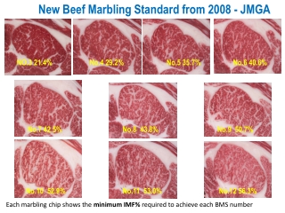 New Beef Marbling Standard from 2008 - JMGA