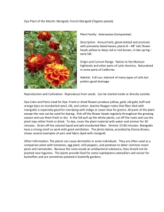 Dye Plant of the Month: Marigold, French Marigold (