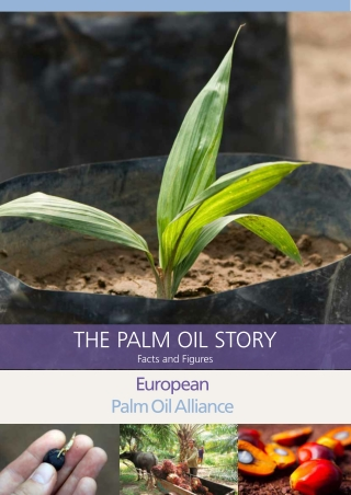 THE Palm Oil sTOry