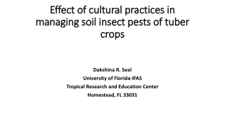 managing soil insect pests of tuber managing soil insect pests of tuber