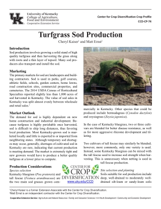 Turfgrass Sod Production