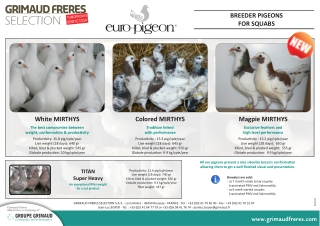 BREEDER PIGEONS FOR SQUABS White MIRTHYS
