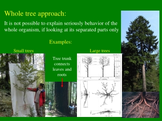 Whole tree approach: