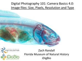 Digital Photography 101: Camera Basics 4.0: Image files: Size, Pixels, Resolution and Type