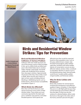 Birds and Residential Window Strikes: Tips for Prevention