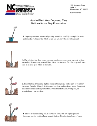 How to Plant Your Dogwood Tree National Arbor Day Foundation
