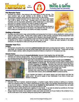 Pet Hamster Facts Pet Hamster Facts