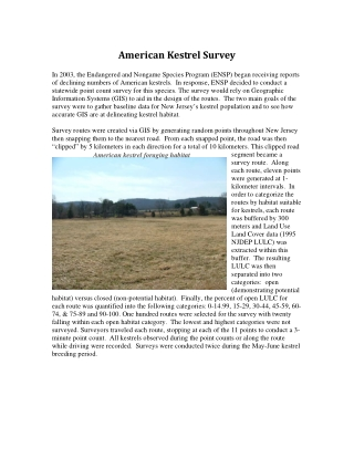 American Kestrel Survey