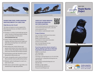 Purple Martin Project