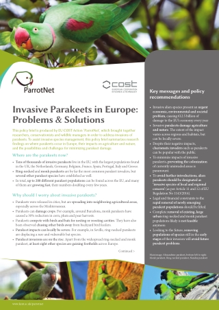 Invasive Parakeets in Europe: Problems & Solutions