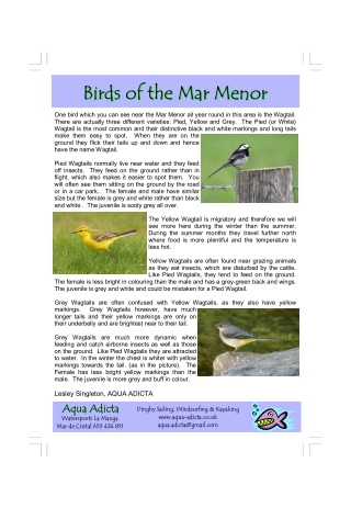 Birds of the Mar Menor Birds of the Mar Menor Birds of the Mar Menor Birds of the Mar Menor