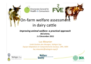 On-farm welfare assessment in dairy cattle