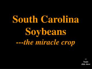 South Carolina Soybeans - the supernatural occurrence crop