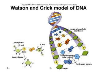 DNA: Structure and Capacity