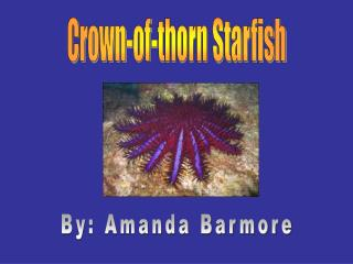 Crown-of-thistle Starfish