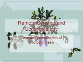 Remote Detecting and Ecophysiology