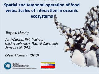 Spatial and fleeting operation of nourishment networks: Sizes of collaboration in maritime biological systems