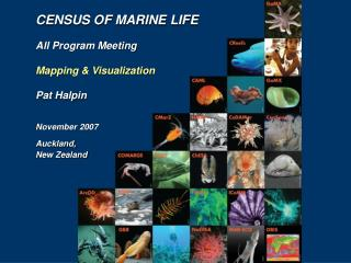Registration OF MARINE LIFE All System Meeting Mapping and Representation Pat Halpin November 2007 Auckland, New Zealand
