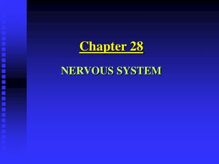 Section 28 Sensory system