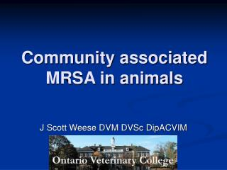Group related MRSA in creatures