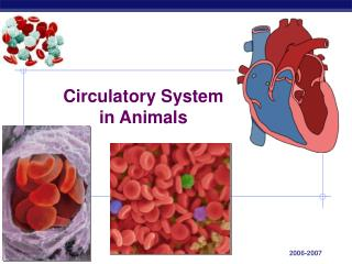 Circulatory Framework in Creatures