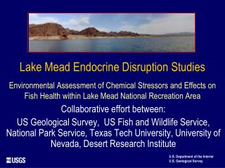 Lake Mead Endocrine Interruption Considers Natural Appraisal of Concoction Stressors and Impacts on Fish Wellbeing insid