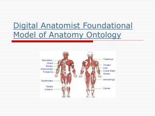 Computerized Anatomist Foundational Model of Life structures Metaphysics