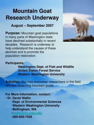 Mountain Goat Research In progress August