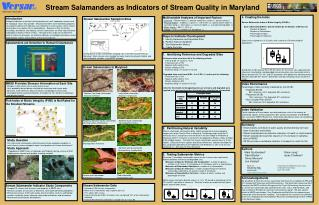 Stream Lizards as Pointers of Stream Quality in Maryland
