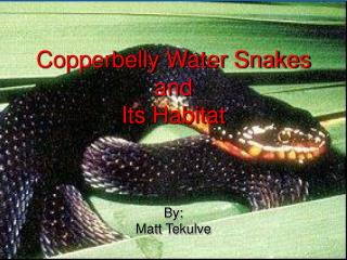 Copperbelly Water Snakes and Its Environment