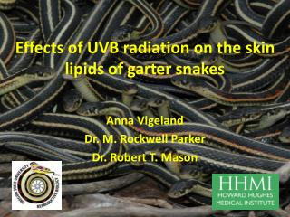 Impacts of UVB radiation on the skin lipids of strap snakes