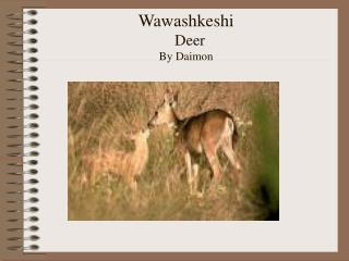 Wawashkeshi Deer By Daimon
